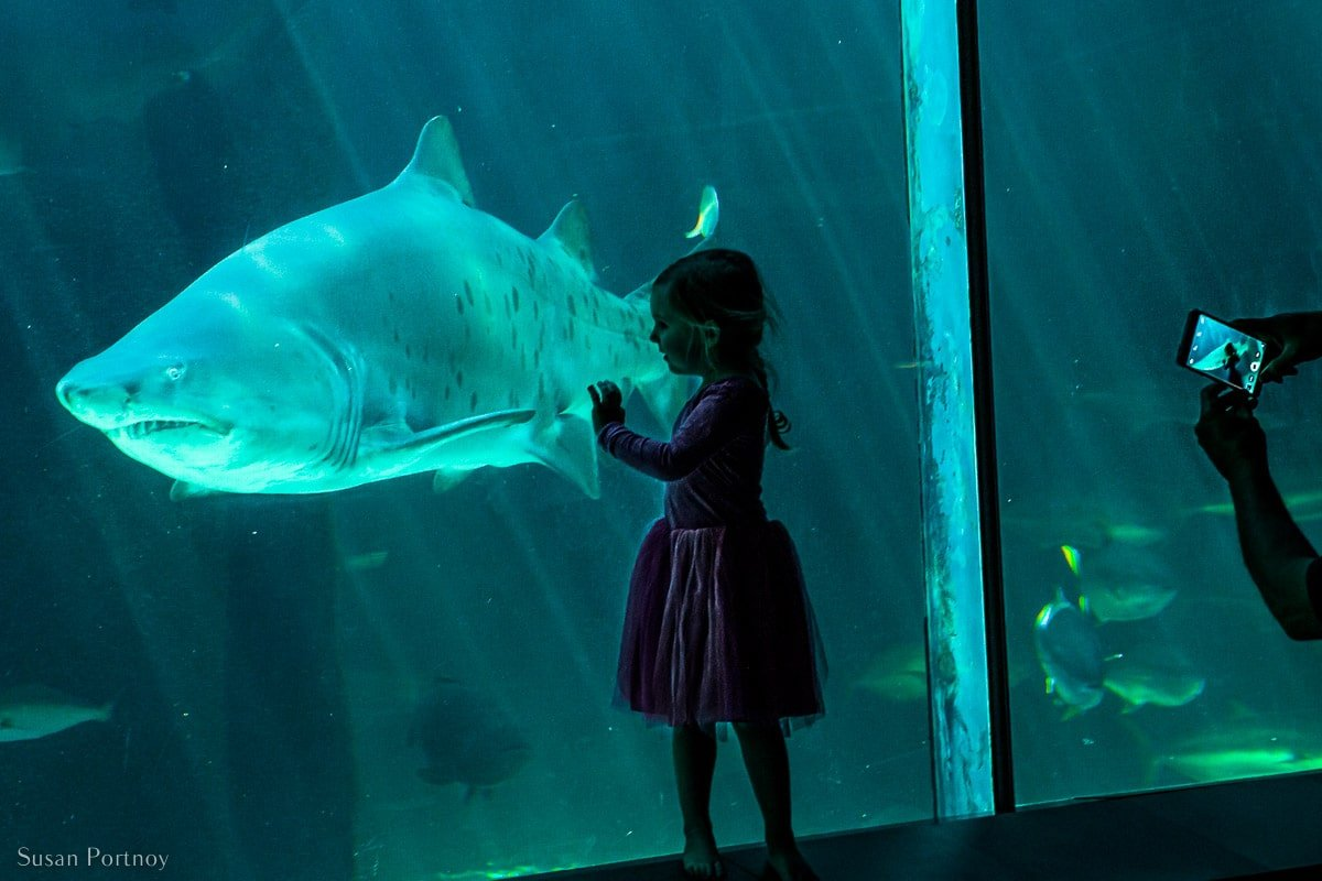 Inside the Two Oceans Aquarium where a shark is behind glass and a little girl is watching