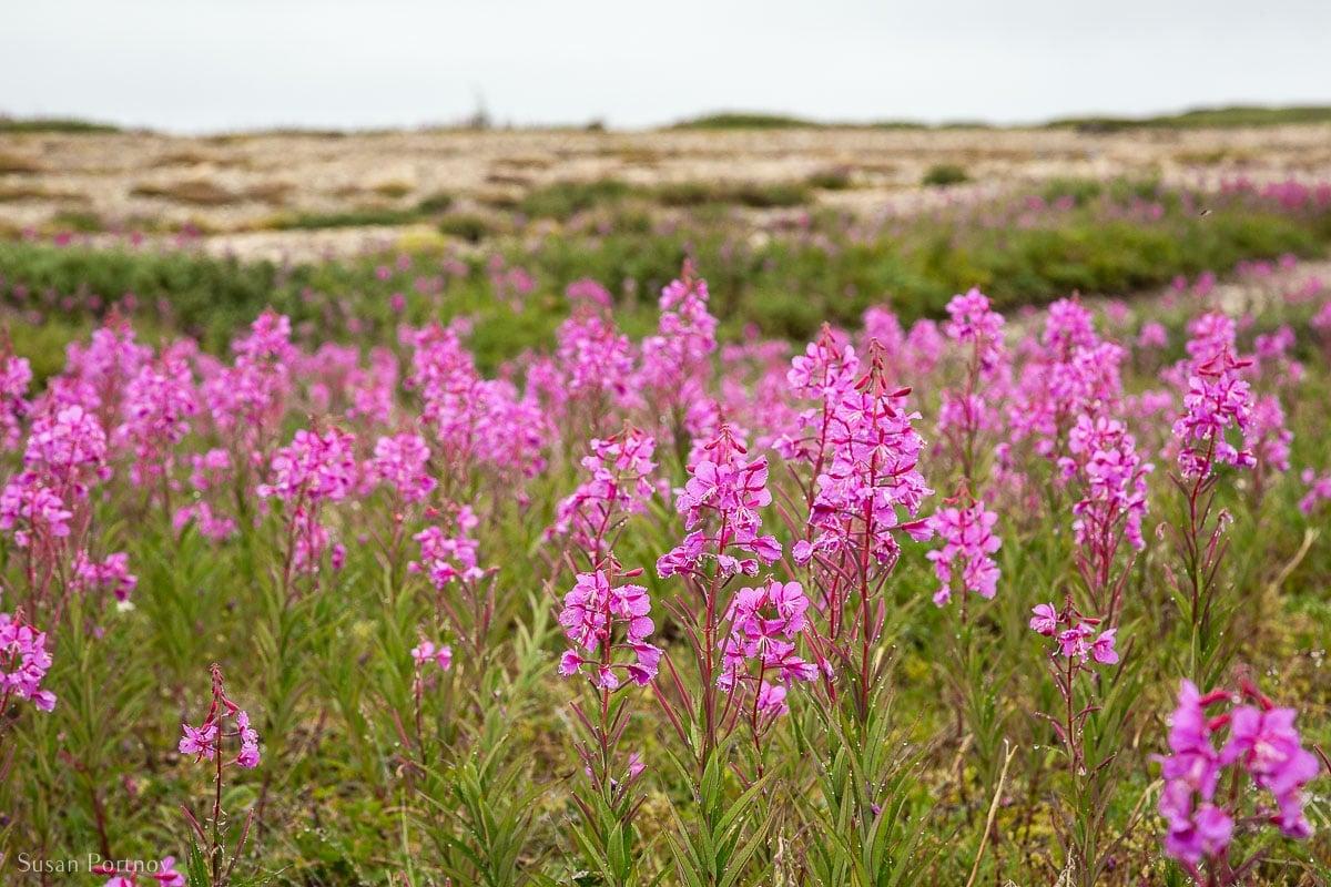 Beautiful pink wildflowers in a field