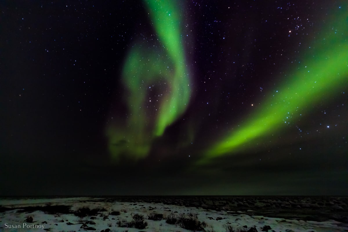 The green lights of Aurora Borealis, across the night sky - one of the many things to do in northern Manitoba