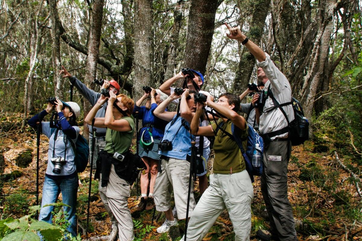 A group of birdwatchers using binoculars looking up on the Hakalau Bird watching tour