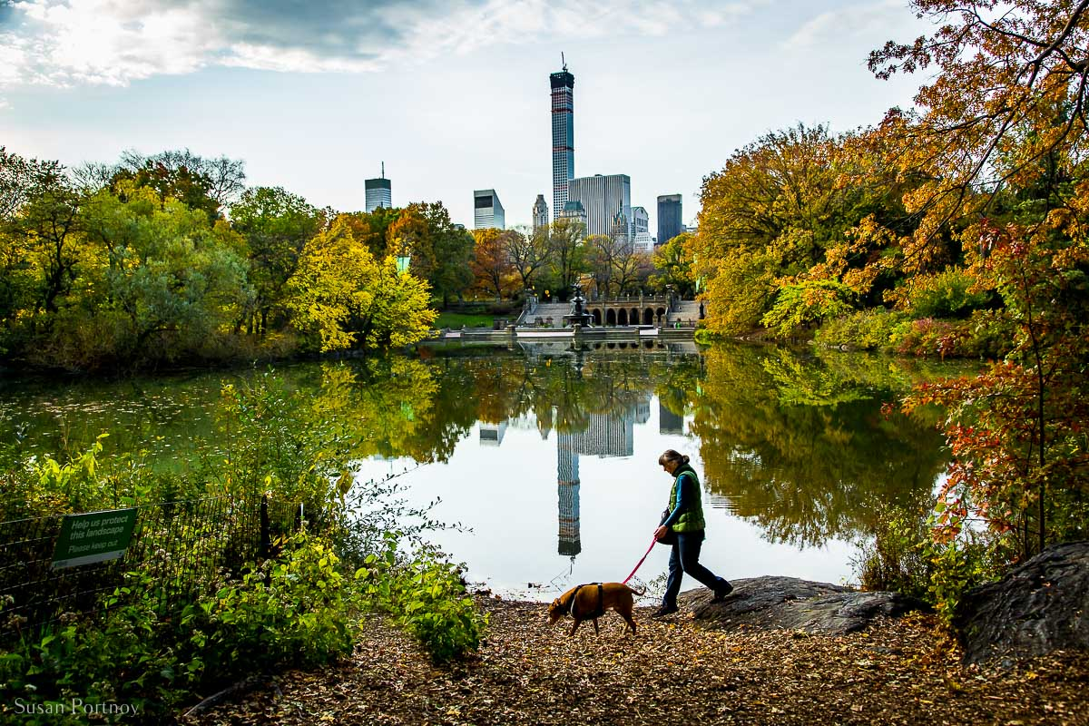 A woman walks a dog north of Bethesda Fountain across the Lake in Central Park bright with fall colors