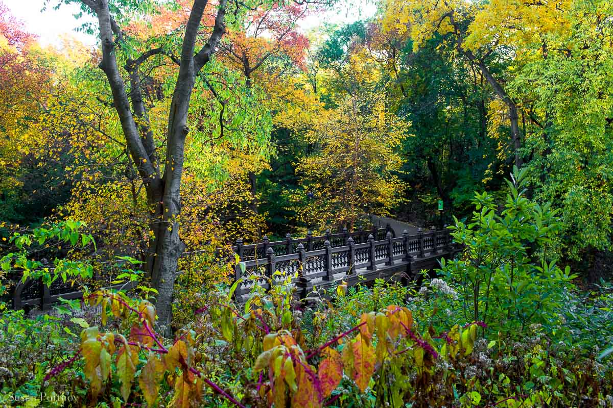 Oak Bridge from the west side engulfed in fall foliage in Central Park