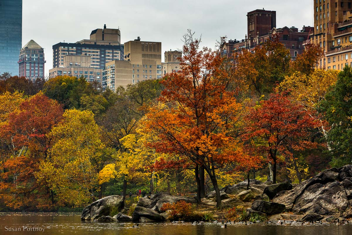 Autumn view to the Herns Head from the northeast side of the Lake in Central Park with ducks swimming in the foreground