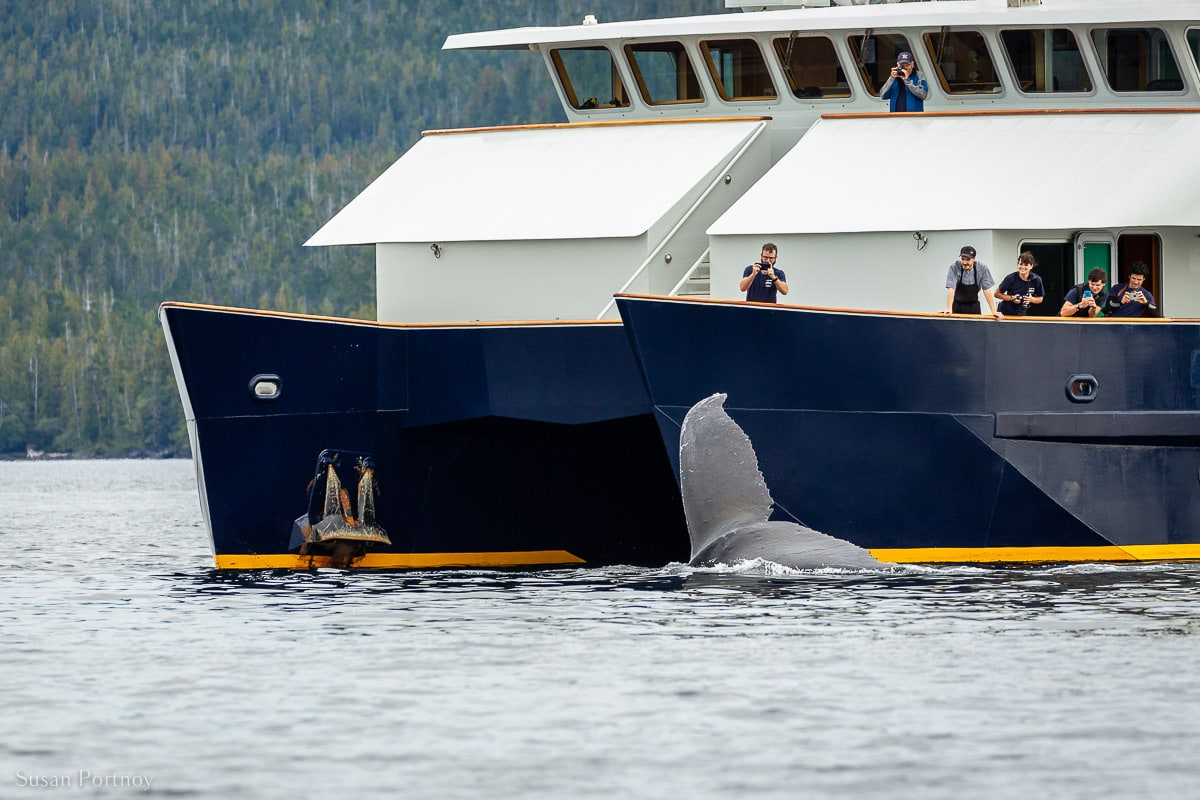 A humpback whale's fluke in the water next to Maple Leaf Adventures' Cascadia