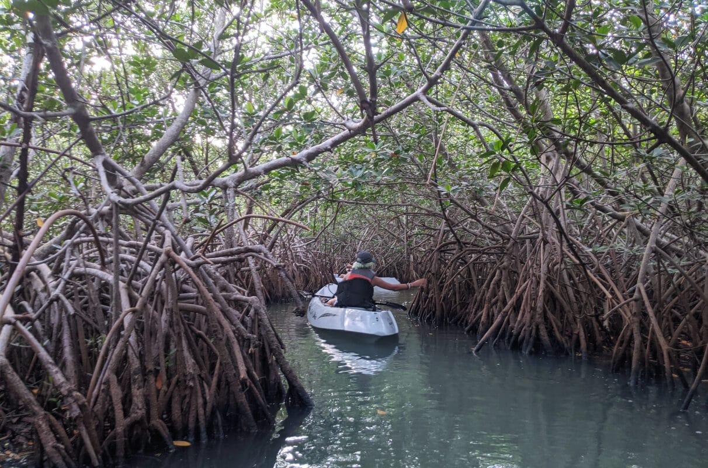 Kayaking through a mangrove tunnel.jpg