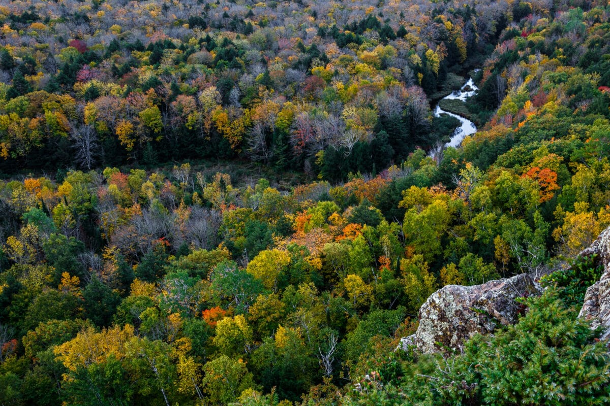 Colorful fall trees with a river running through it - view is aerial