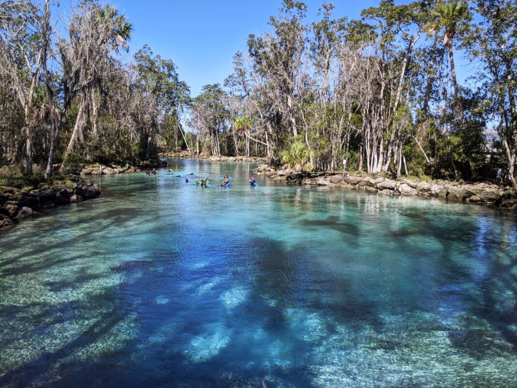 Manatees floating in front of kayakers at Three Sisters Springs in Crystal River - one of the cool outdoor adventures in Florida