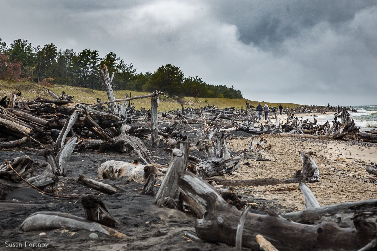Whitefish Point beach littered with logs and debris from a storm and the beach in Michigan's upper Peninsula