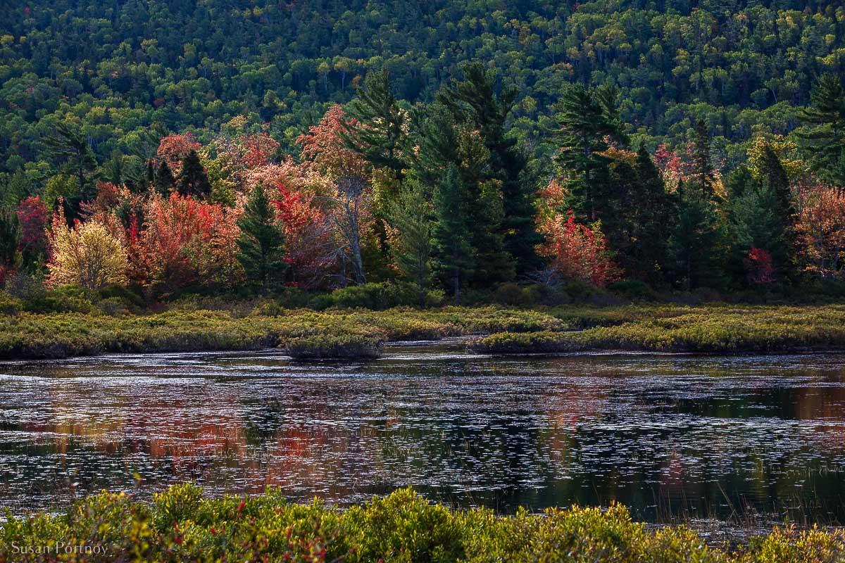 Beautiful MI trees and fall colors in MIchigan's Upper Peninsula