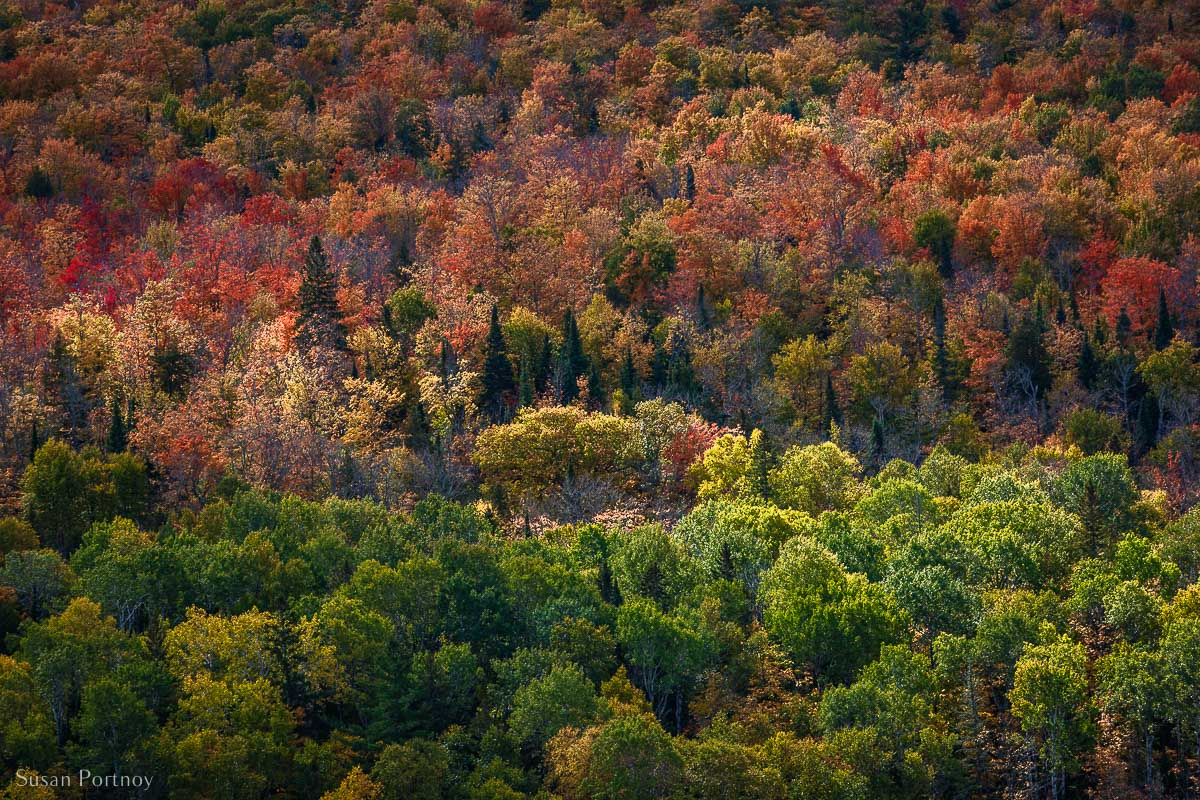 Gorgeous view of color fall leaves and trees from the Brockway Mountain Drive lookout